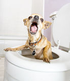 Flushed Stock Photos