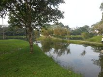 Flussökologie in den Parkwiesen stockbild