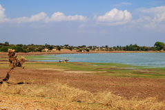 Fluss in Äthiopien Stockbilder