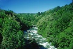 Fluss über Holz Stockfotos