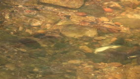 Fluss. stock video footage