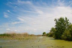 Fluss auf Hintergrundschilf und -himmel Stockfoto