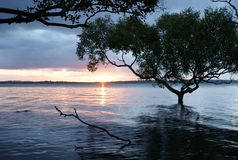 Fluss-Baum Lizenzfreie Stockfotografie