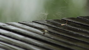 Fluss-Baum-Sand-Regen stock video