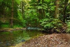 Fluss Bela im Tal Pilske-udoli Lizenzfreie Stockbilder