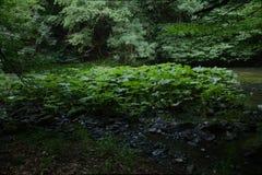 Fluss-Bett in den Harz-Bergen Stockbilder