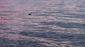 Fluss bewegt an der Sonnenuntergangnahaufnahme wellenartig stock video