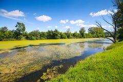 Fluss Bosut in Vinkovci Stockbild