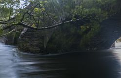 Fluss-Cockerspaniel stockbilder