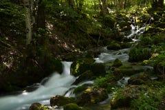 Fluss in das Holz, das auf langer Belichtung also dem Wasser dargestellt wurde, wurde seidig lizenzfreie stockfotos