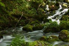 Fluss in das Holz, das auf langer Belichtung also dem Wasser dargestellt wurde, wurde seidig Lizenzfreie Stockbilder
