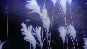 Fluss deckt im Wind mit Schilf und rüttelt Wildnis, dunstige Art stock footage