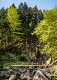 Fluss an den Karpatenbergen Stockbild