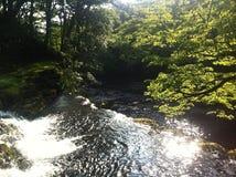 Fluss in den Wäldern von Wales Lizenzfreies Stockbild