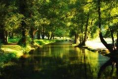 Fluss, der Abflussrinnewald führt Stockbilder