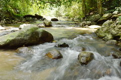 Fluss, der auf Katarakt fließen und Wasser, das in Wald spritzt stockfotografie