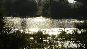 Fluss, der bei Sonnenuntergang läuft stock video