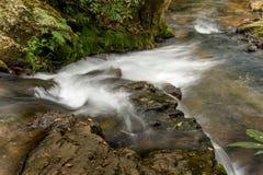 Fluss, der den Wald durchfließt Stockbilder