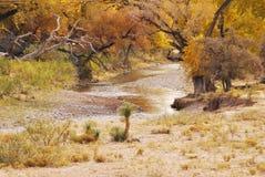 Fluss, der durch Bäume runing ist Lizenzfreie Stockfotografie
