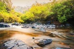 Fluss, der durch das Holz läuft Stockfoto