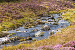 Fluss, der durch eine schottische Heideschlucht läuft Lizenzfreie Stockfotos