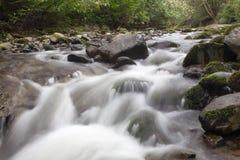 Fluss, der durch Wald überschreitet stockfotografie