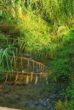 Fluss, der entlang belaubten Wald überschreitet lizenzfreie stockfotografie