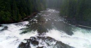 Fluss, der grünen Wald 4k durchfließt stock video footage