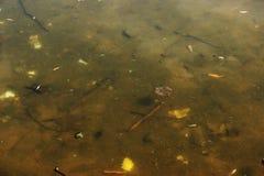Fluss, der mit verschiedenem Abfall und Abfall verunreinigt wird, verunreinigte Flüsse, Fotografiehintergrund Stockfoto