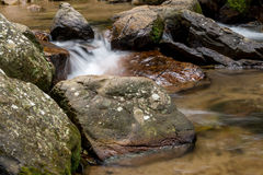 Fluss, der Wald durchfließt Lizenzfreies Stockfoto