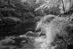 Fluss, der Waldland durchfließt Lizenzfreies Stockfoto