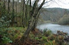 Fluss des Waldes Stockfotografie