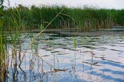 Fluss Dorf Pluta Ukraine Stockfoto