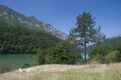 Fluss Drina in Serbien Stockfotos