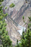 Fluss durch die Bäume Lizenzfreies Stockbild