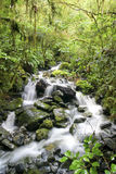 Fluss durch Feuchtgebiet Stockfotos