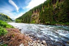 Fluss durch grünen Wald lizenzfreie stockbilder