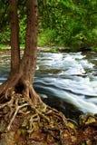 Fluss durch Holz Stockbild