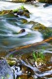 Fluss durch Holz Lizenzfreies Stockbild