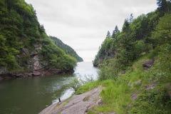 Fluss durch Kiefern zum Ozean Lizenzfreies Stockfoto