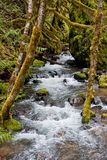 Fluss durch moosiges Holz Lizenzfreies Stockfoto