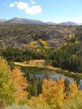 Fluss durch Wald Lizenzfreie Stockbilder