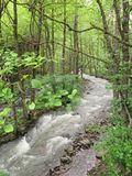Fluss in einem Gebirgswald stockbilder