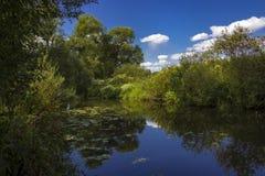 Fluss in einem Sommerwald stockfoto