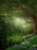 Fluss in einem Wald Stockbilder