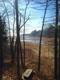Fluss in einem Waldland Stockbilder
