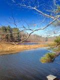 Fluss in einem Waldland Stockbild