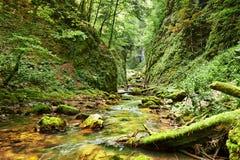 Fluss in einer Schlucht Stockfotografie