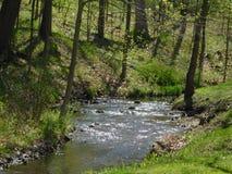 Fluss fließt ruhig im Wald Lizenzfreie Stockfotografie