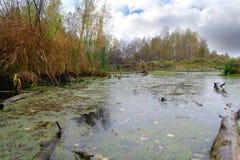 Fluss gegen Herbstwald mit den gelben und grünen Bäumen und heller bunter blauer Himmel mit Wolken lizenzfreie stockbilder